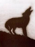 Coyote #144 Limited Edition Print - Edward Ruscha
