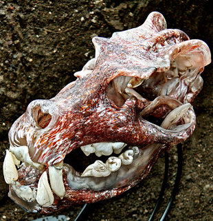Java Tiger Skull Glass Sculpture 2010 11 in Sculpture by Ron Seivertson