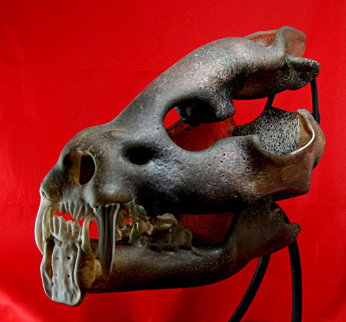 Saber Toothed Cat Skull Unique Glass Sculpture 2010 11 in Sculpture by Ron Seivertson
