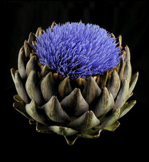 Artichoke in Bloom 2010 Limited Edition Print - Jonathan Singer