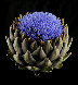 Artichoke in Bloom 2010 Limited Edition Print by Jonathan Singer - 0