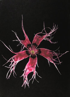 Japanese Carnation 2010 Limited Edition Print by Jonathan Singer