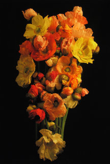 Icelandic Poppies 2010 Limited Edition Print - Jonathan Singer
