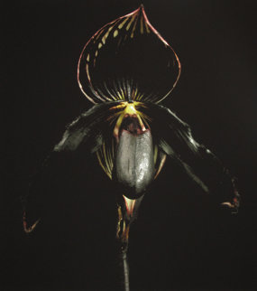 Black Orchid Limited Edition Print - Jonathan Singer