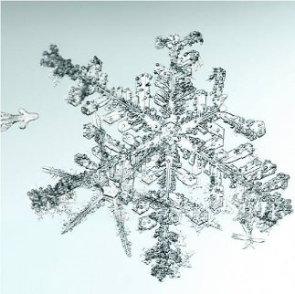 Untitled (Snowflake) 2006 Limited Edition Print - Doug and Mike Starn
