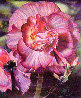 Begonia 1984 Limited Edition Print by Brett Livingstone Strong - 0