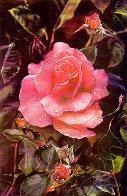 Prehistoric Rose 1984 Limited Edition Print by Brett Livingstone Strong - 1