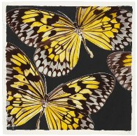 Monarchs 2006 Limited Edition Print by Donald Sultan - 0