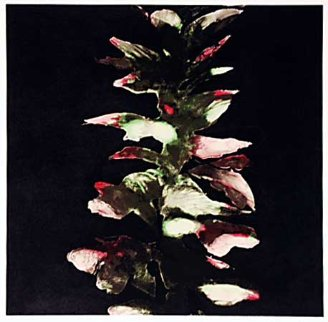 Acanthus 1994 Limited Edition Print - Donald Sultan