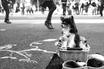 Elvis' Dog 2016 Photography - Adi Tarkay