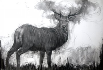 A Deer Drawing 2015  39x59 Drawing by Nico Vrielink