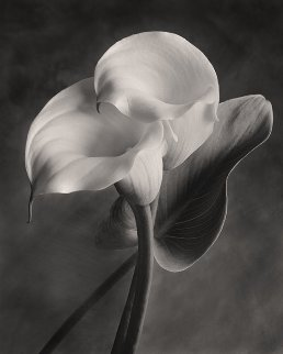 Lily No. 2 2005 Photography by Sondra Wampler