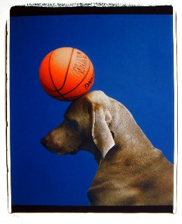 Game 2000 Photography - William Wegman
