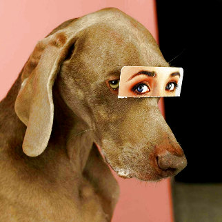 False Eyes 2019 Photography - William Wegman