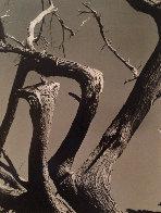 Cypress, Point Lobos 1955 California Limited Edition Print by Edward Weston - 0
