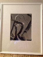 Cypress, Point Lobos 1955 California Limited Edition Print by Edward Weston - 1