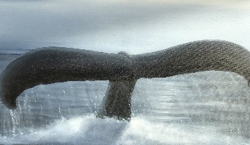 Whale Tale 2000 41x59 Original Painting - Robert Wyland