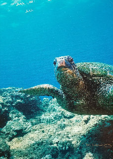 Sea Turtle Encounter AP 2001 Limited Edition Print - Robert Wyland