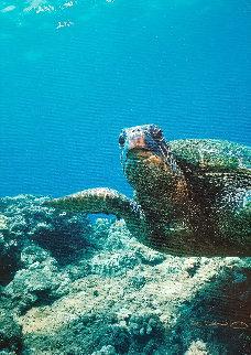 Sea Turtle Encounter AP 2001 Limited Edition Print by Robert Wyland