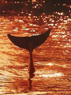 Dolphin Tales 2001 Limited Edition Print by Robert Wyland - 0