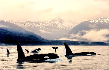 Orca Northern Waters 2009 Limited Edition Print by Robert Wyland