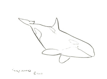 Orca I 2017 18x20 Drawing - Robert Wyland