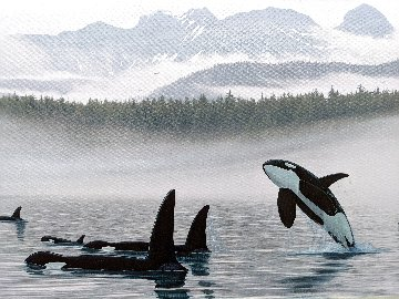Misty Orca Waters 2008 Limited Edition Print - Robert Wyland