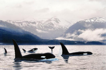 Orca\'s Northern Waters Limited Edition Print - Robert Wyland