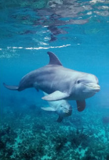 Dolphin Time 2006 Limited Edition Print - Robert Wyland