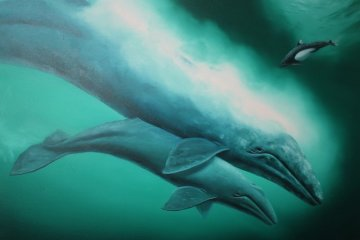 California Grey Whale and Calf 1983 31x41 Original Painting - Robert Wyland