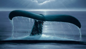 Whale Sighting AP 2001 33x47 Limited Edition Print - Robert Wyland