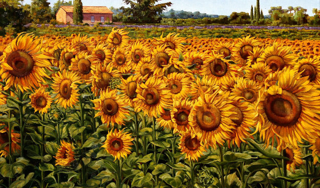 Sunflowers in a Summer Breeze 2016 32x48 Original Painting by Caroline Zimmermann
