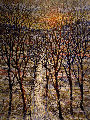 Winter Trees Limited Edition Print - Bruno Zupan
